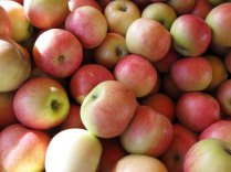 jonagold-apples.jpg