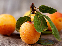 obst_mirabelle_3-1