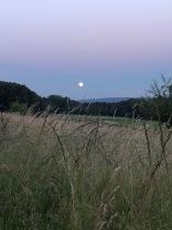 Vollmond in Landschaft_1