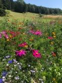 Hagschnurer Garten Juli 18