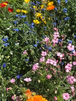 Hagschnurer Garten Juli 18_2