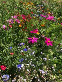 Hagschnurer Garten Juli 18_3